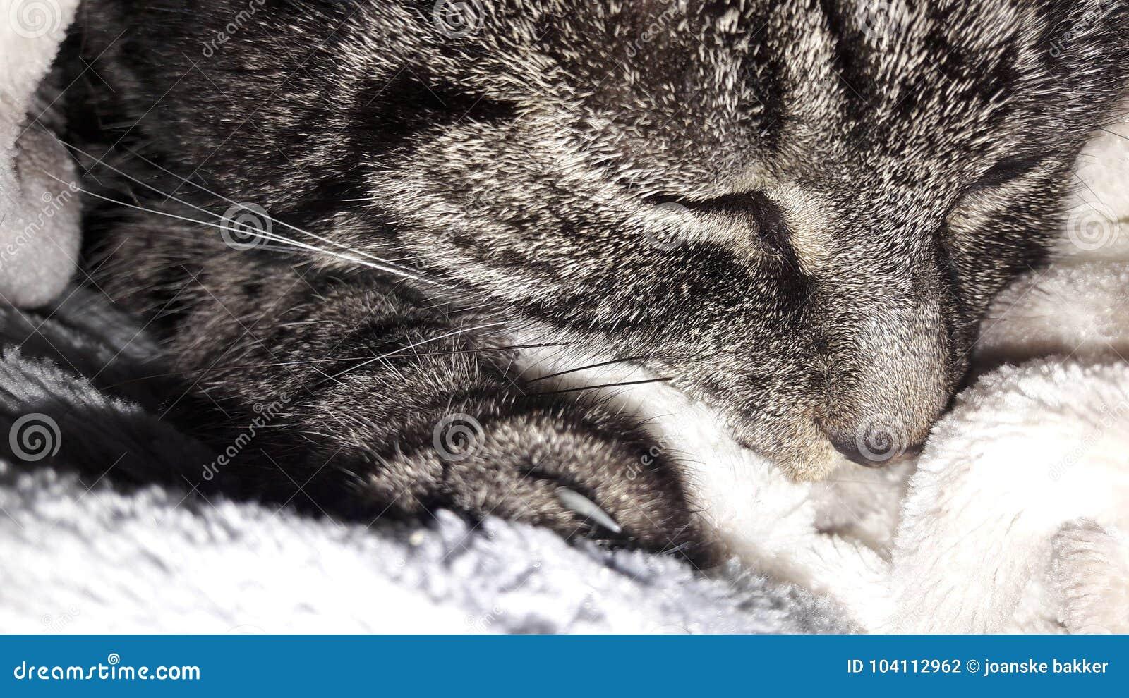 在羊毛的猫偎依