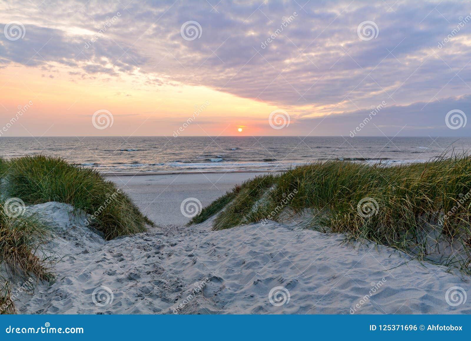 在美丽的海滩的日落与在Henne子线,日德兰丹麦附近的沙丘风景