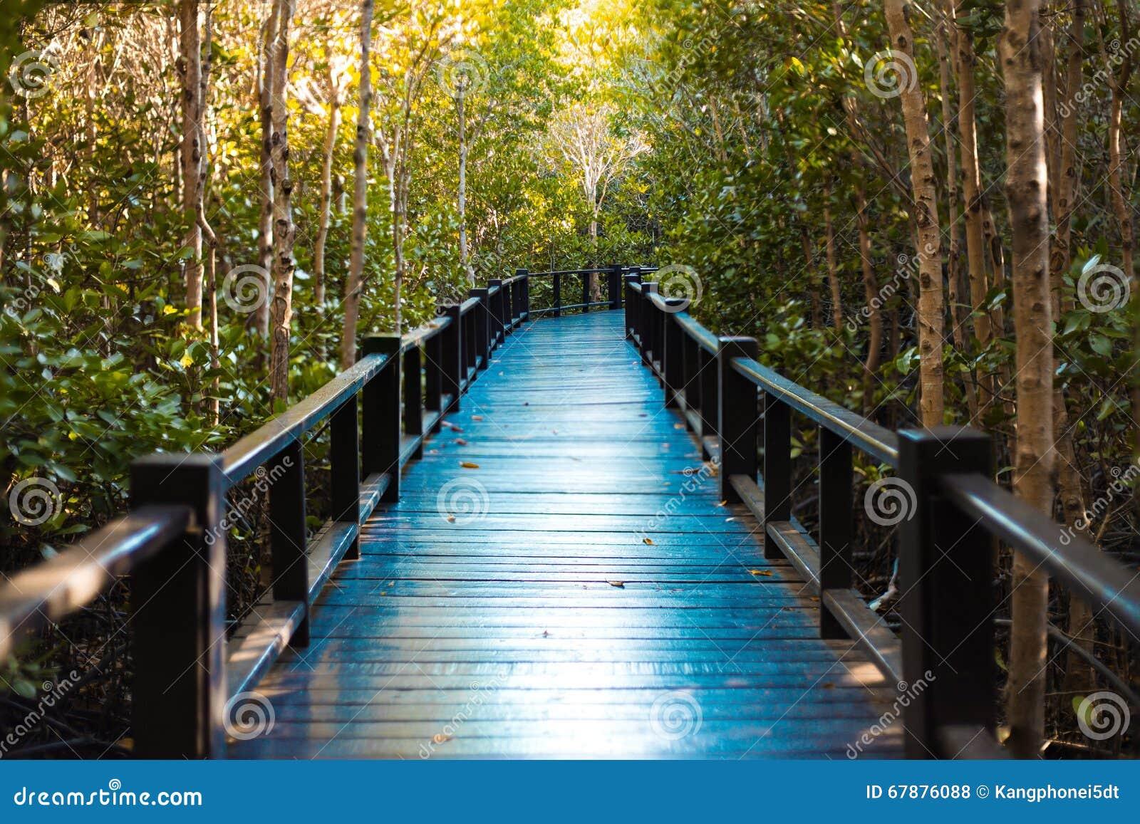 在美洲红树Pranburi,班武里府,泰国的走道桥梁