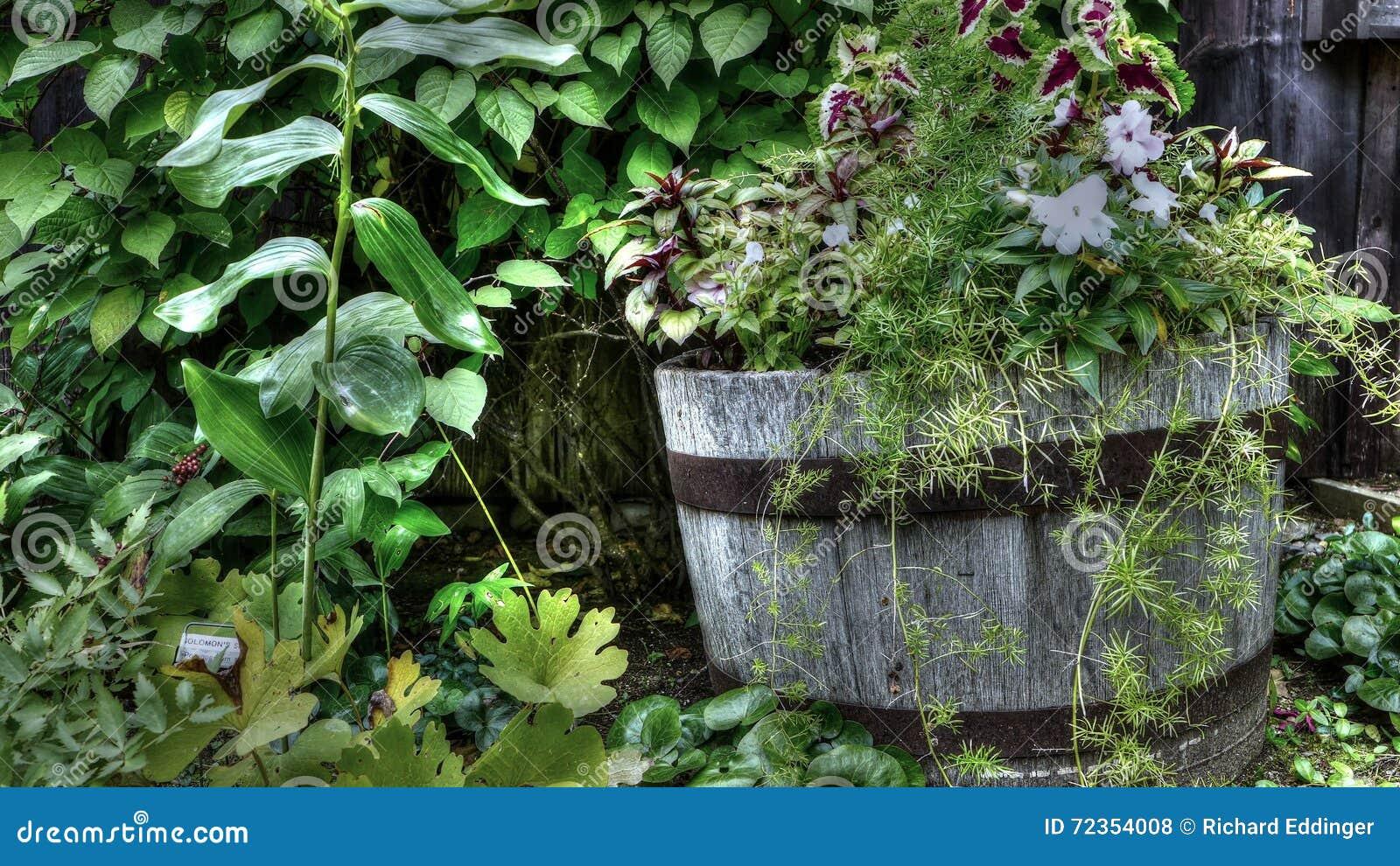 在老木桶的花