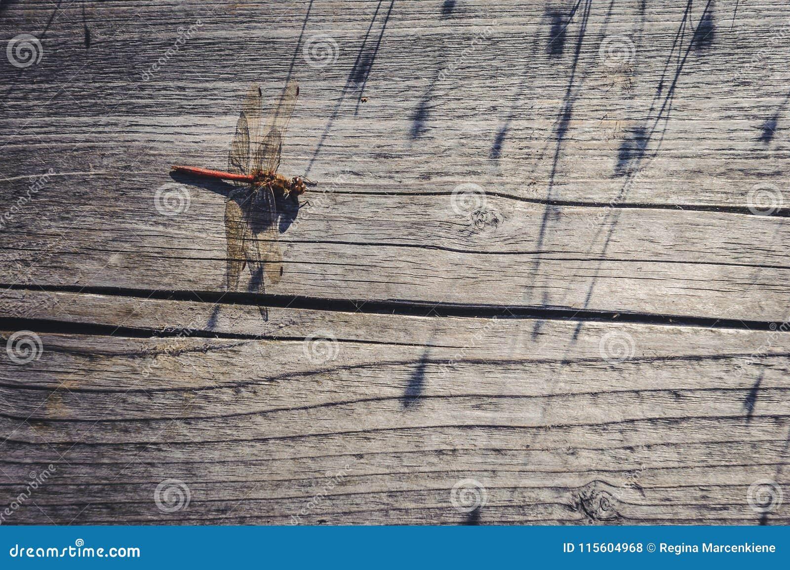 在老板条木背景的蜻蜓