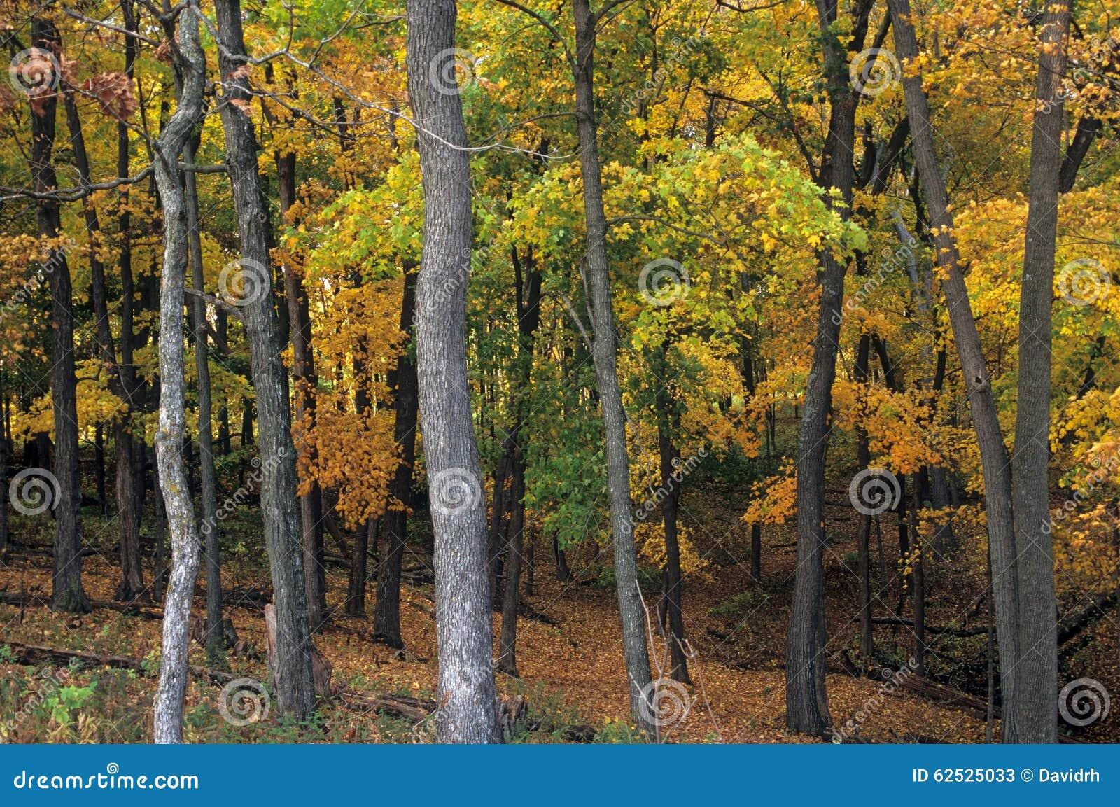 在肖象土墩国家历史文物,衣阿华的秋天叶子