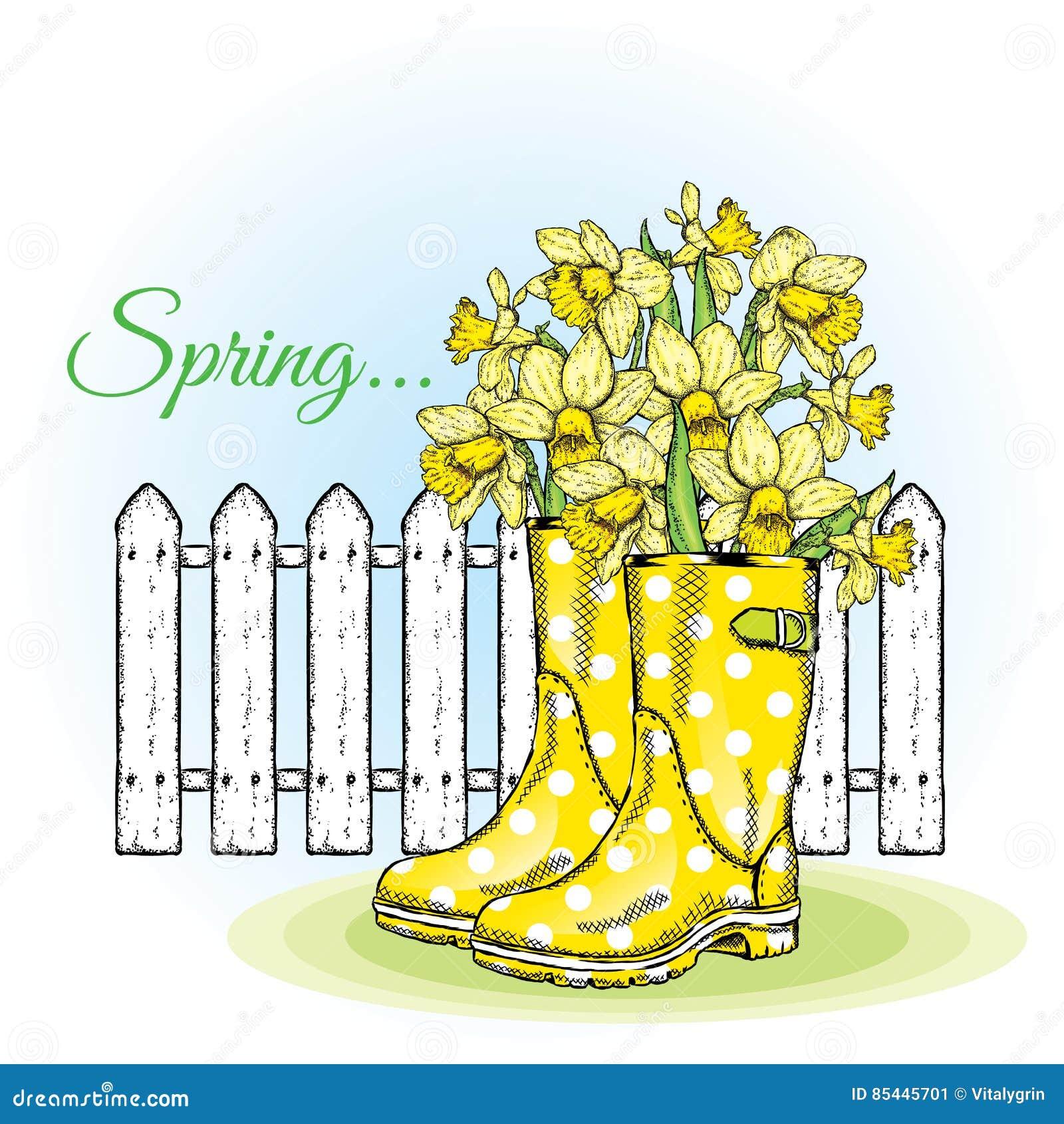 在胶靴的美丽的黄水仙 反对白色篱芭的春天构成 也corel凹道例证向量 背景美丽的刀片花园