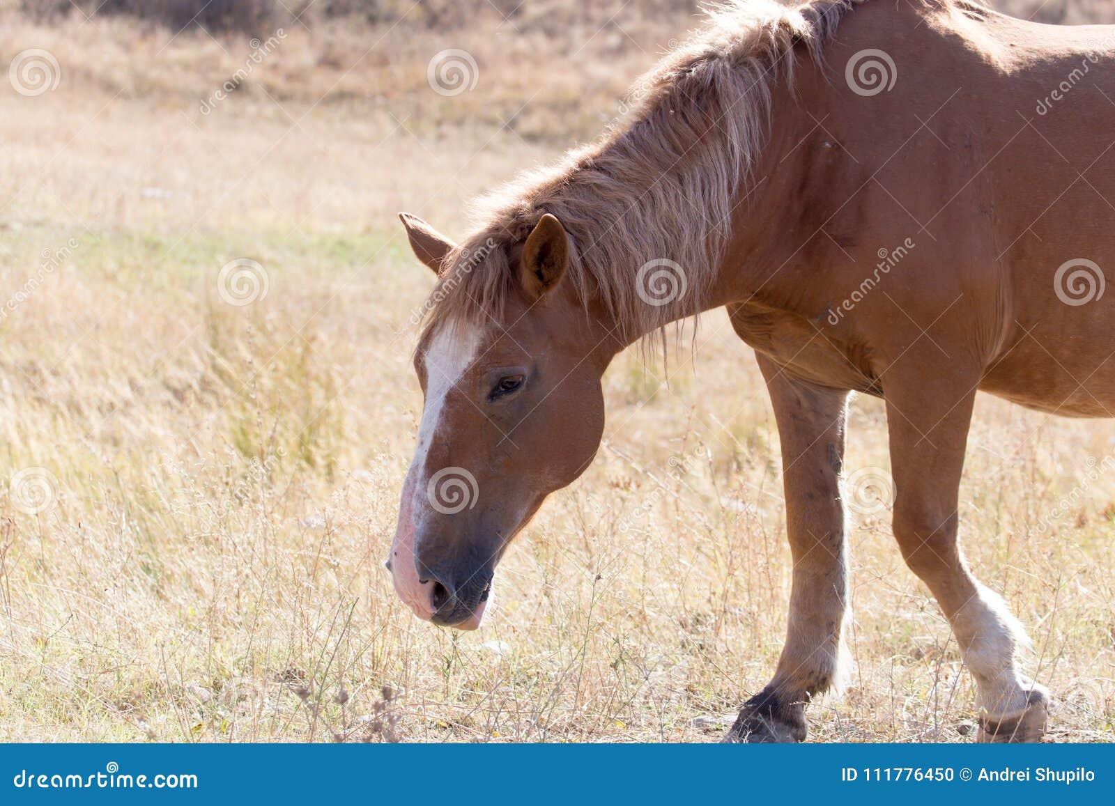 在自然的红色马在秋天