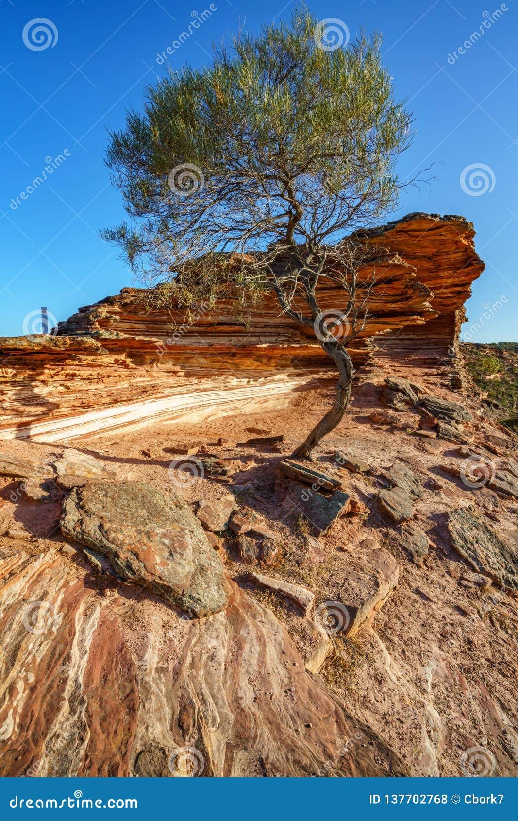 在自然窗口圈足迹,kalbarri国立公园,澳大利亚西部6的太阳