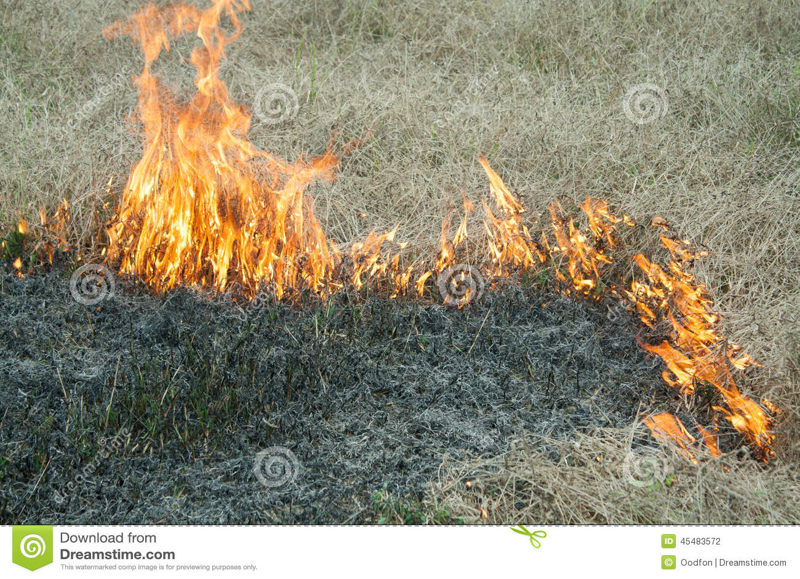 在自然-烧伤的火在领域的一棵草