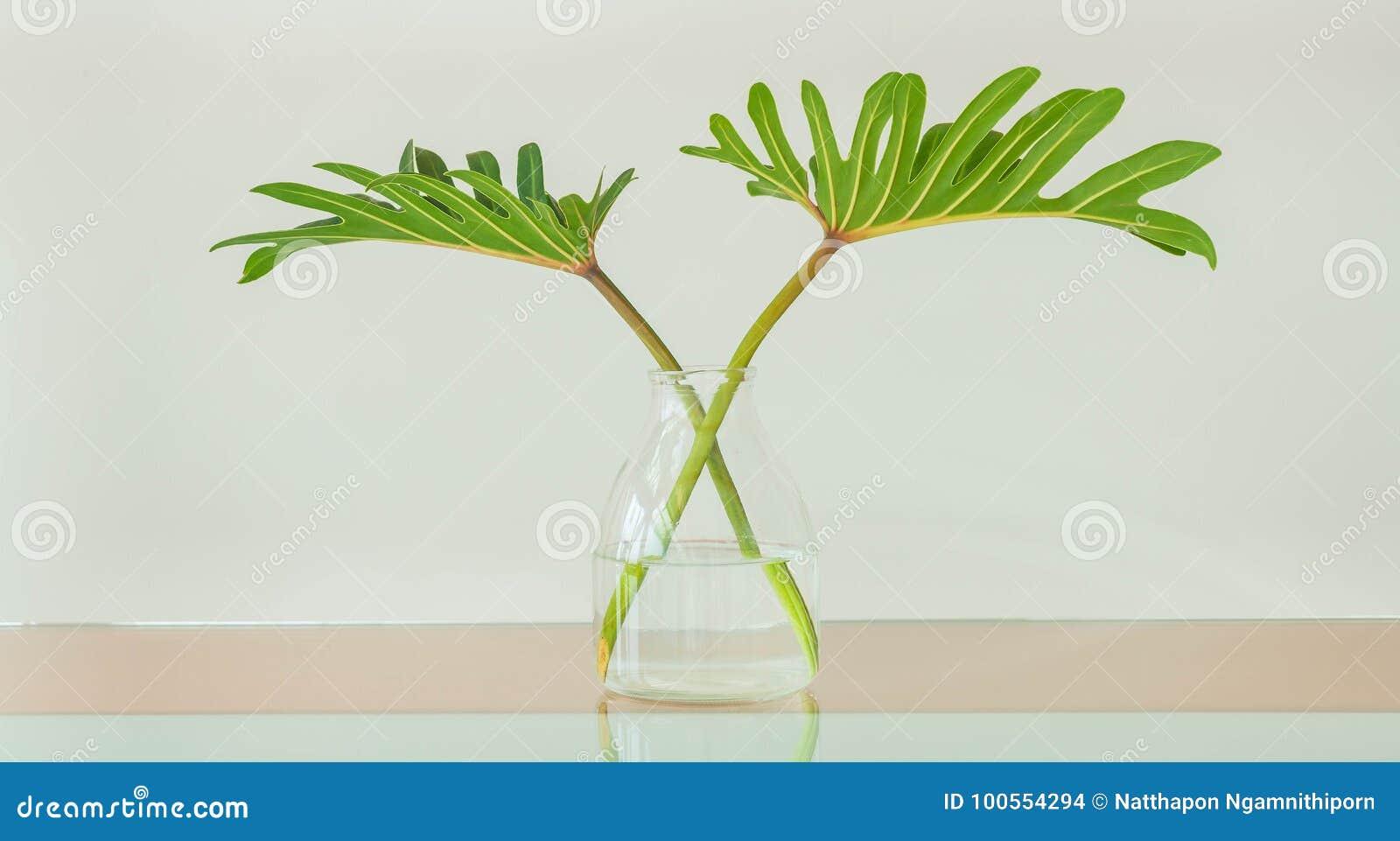 在花瓶的叶子