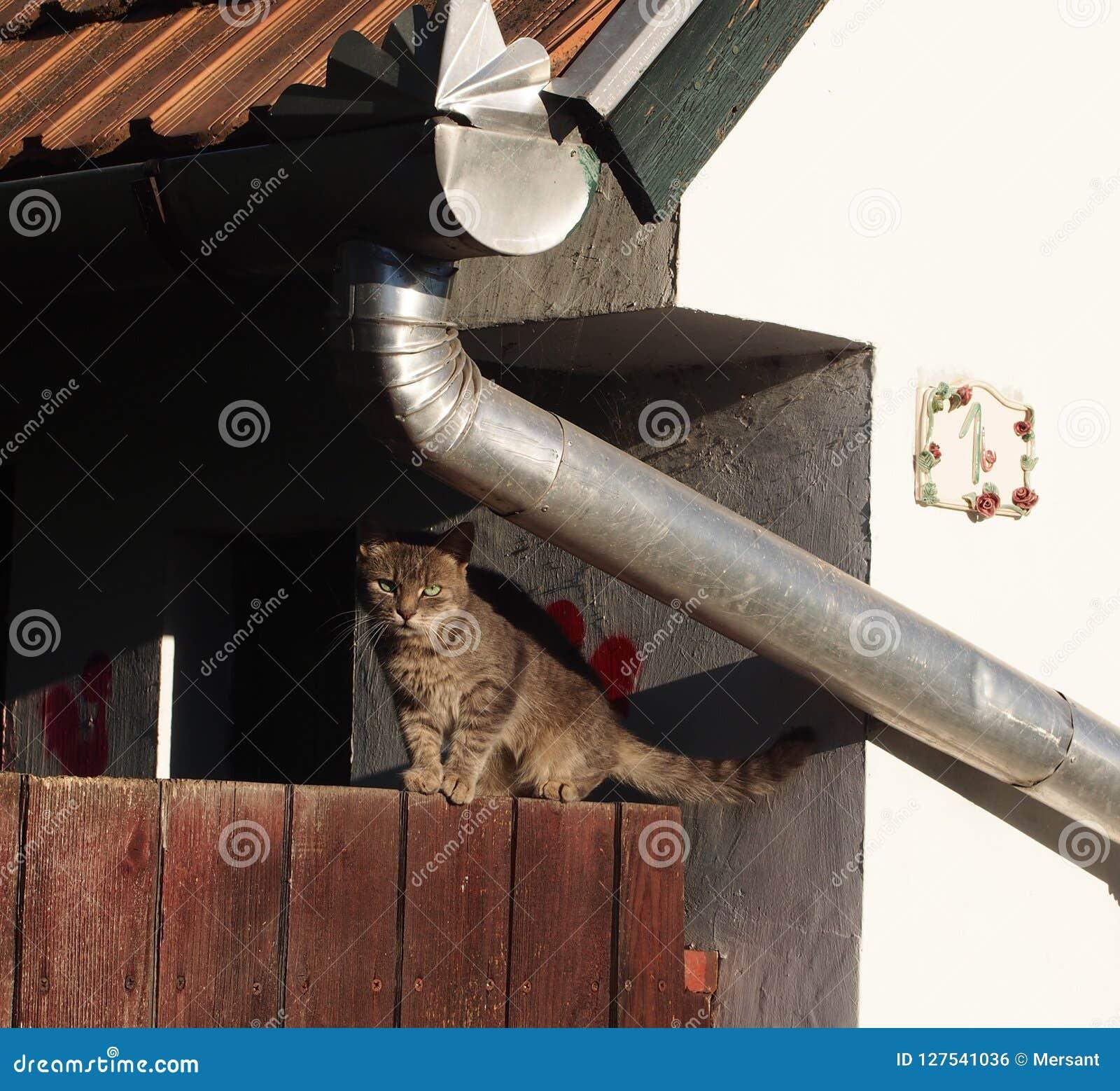 在范围的猫