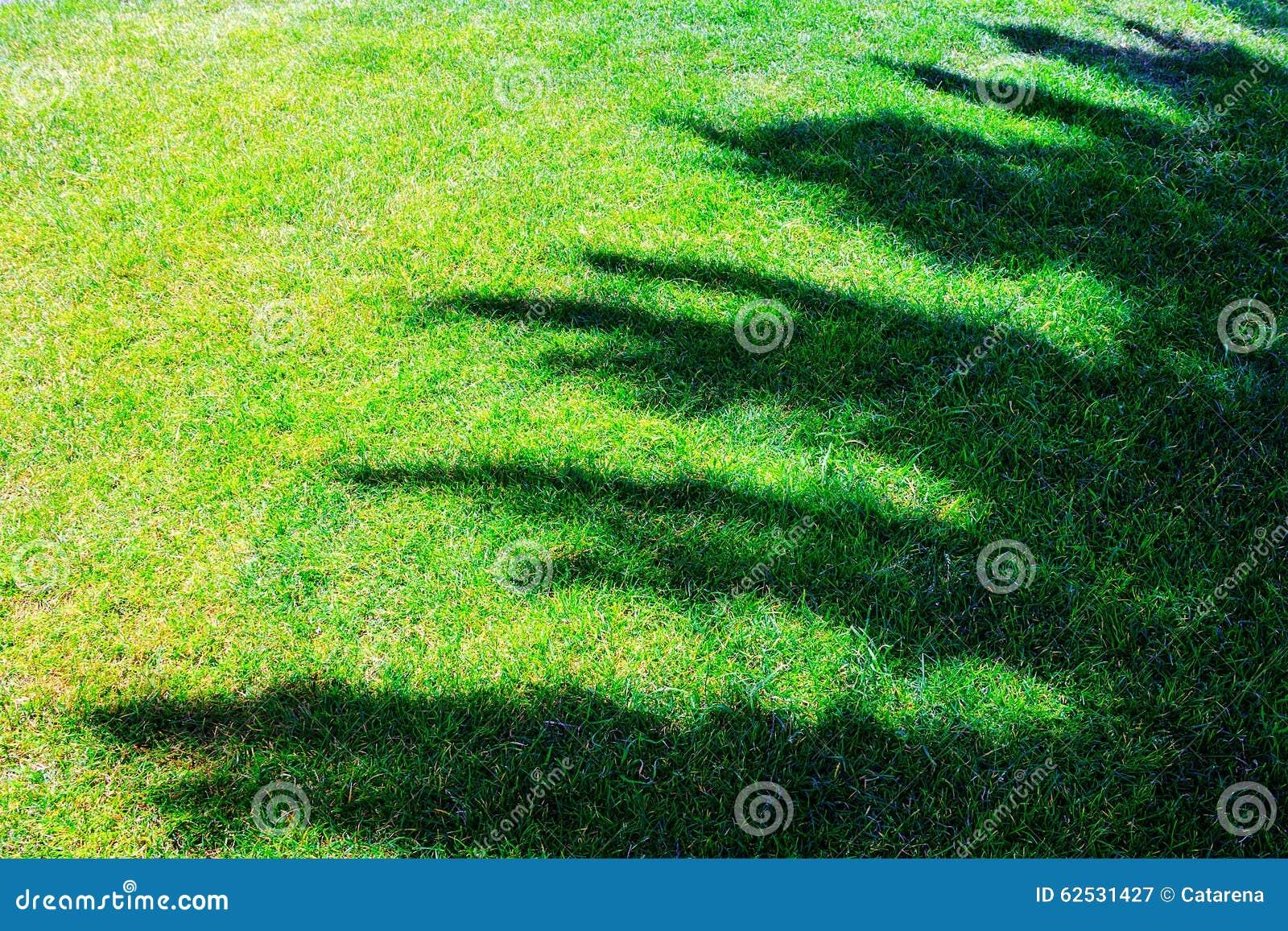 在草地的树阴影