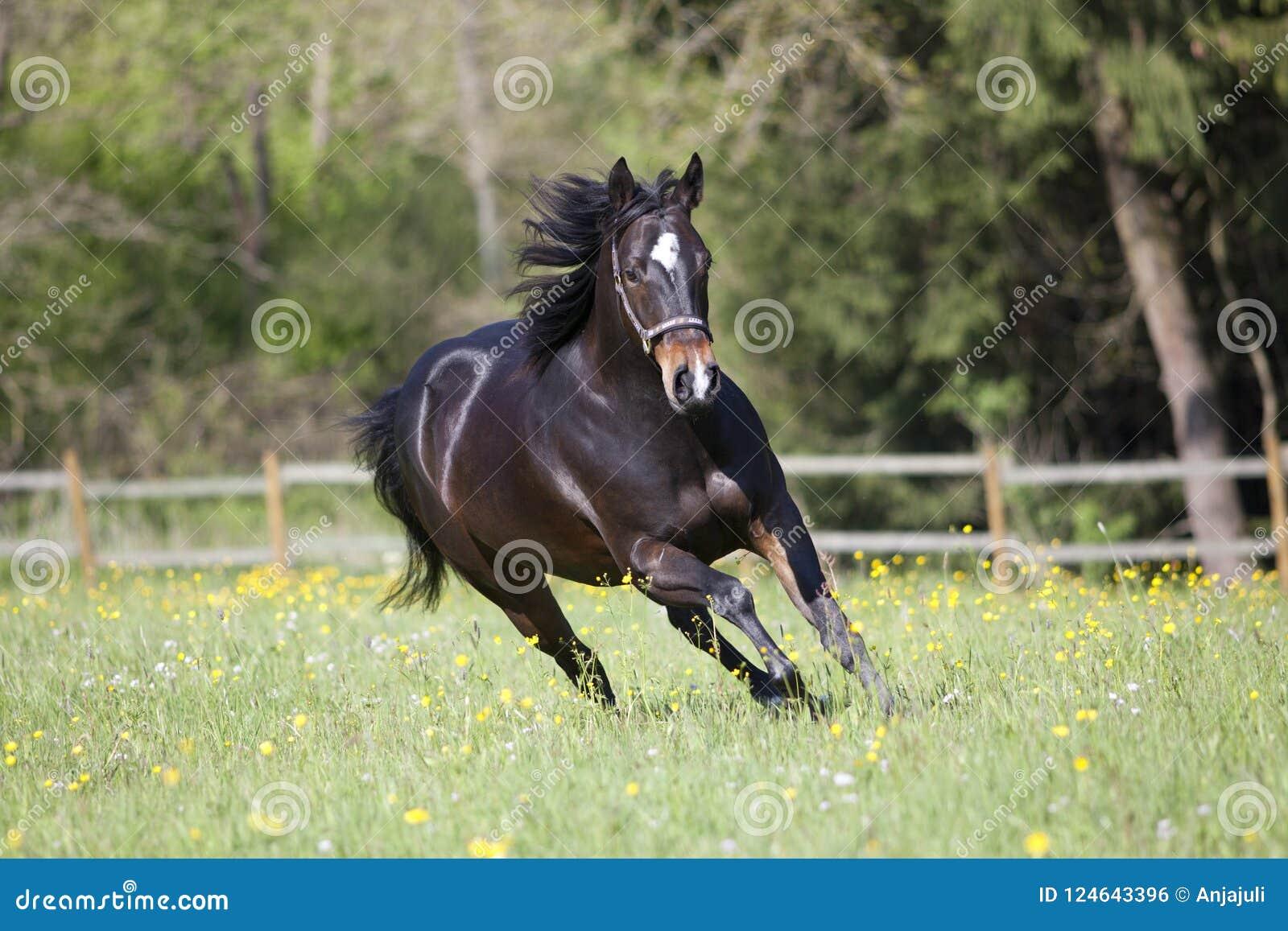 在草甸任意跑的短距离冲刺的马