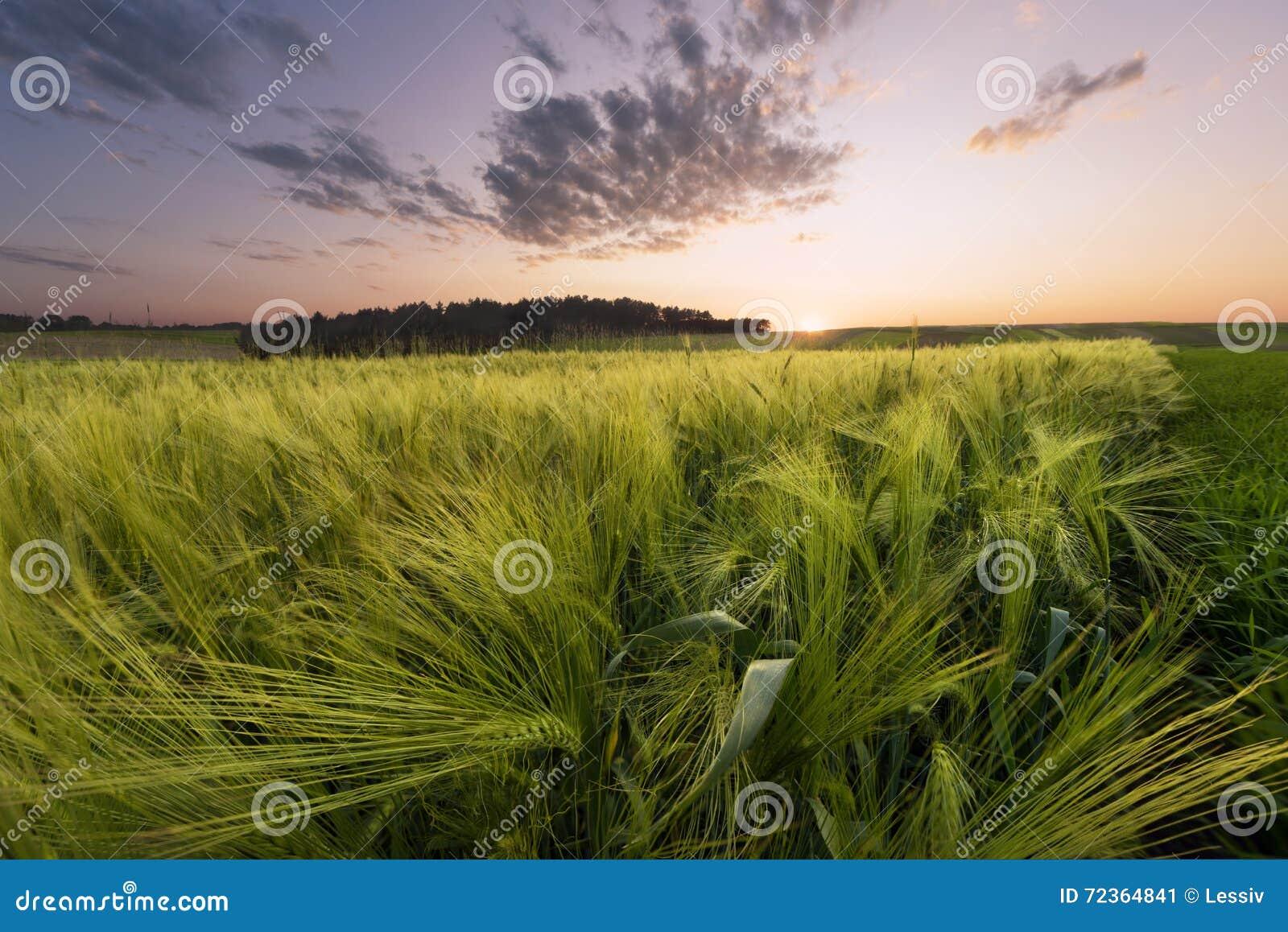 在草甸的日落