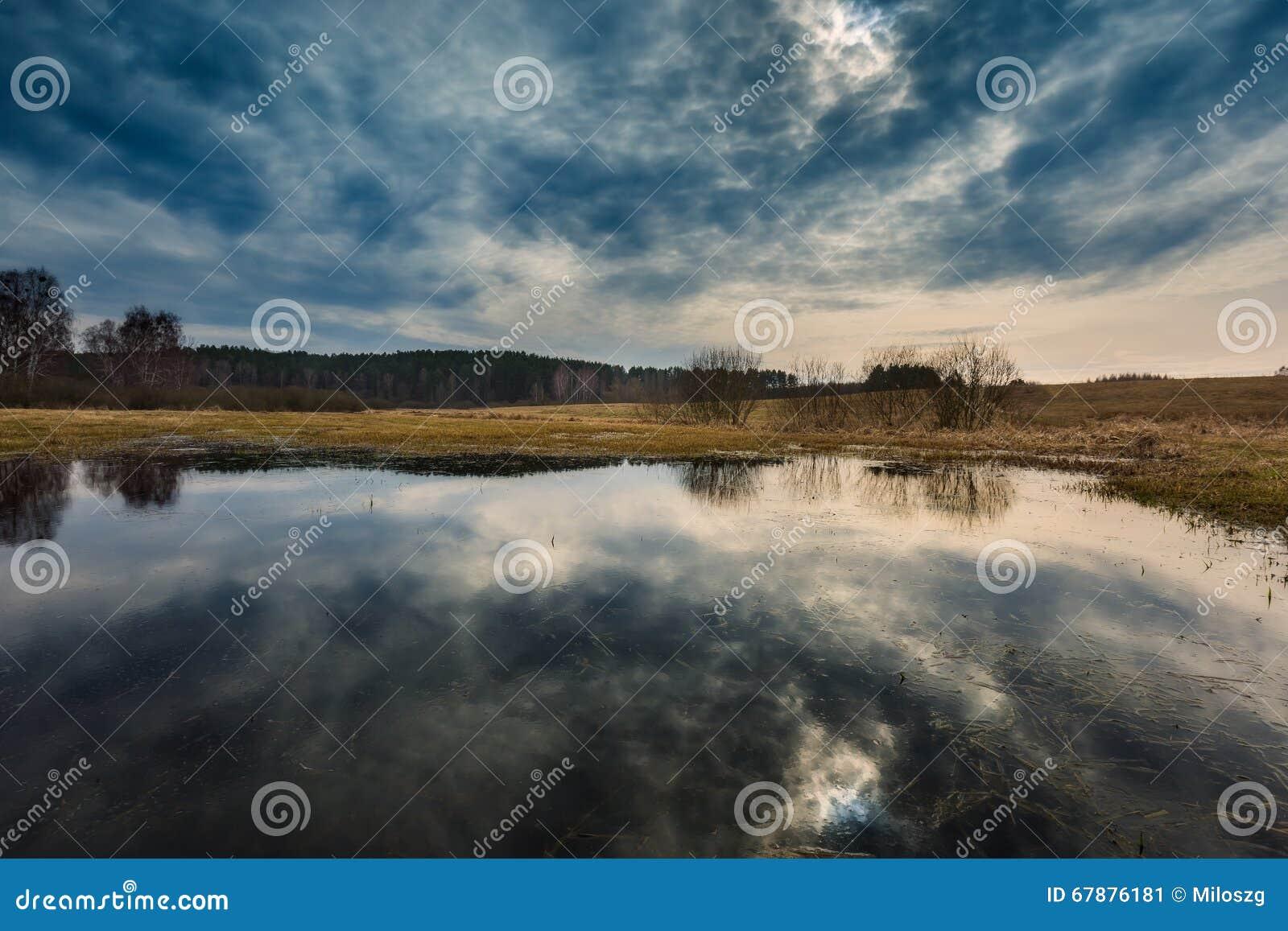 在草甸的早期的春天在沼泽地附近