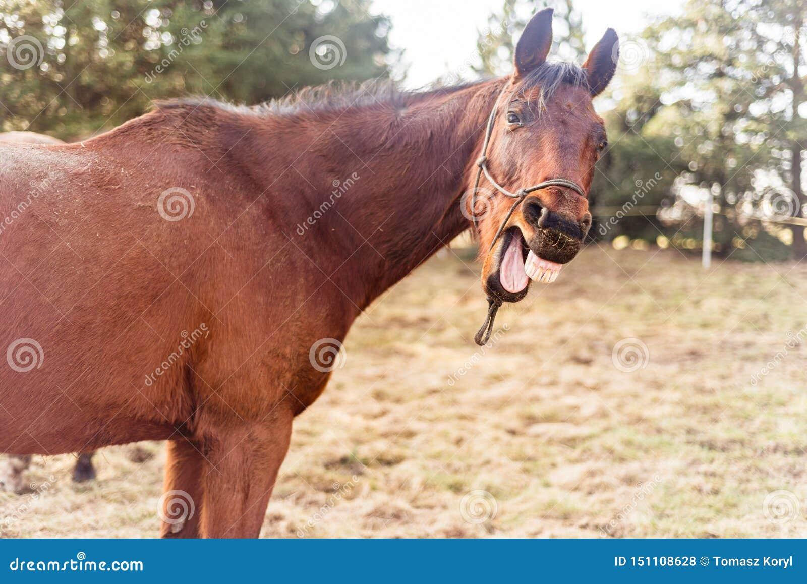在草甸的笑的马