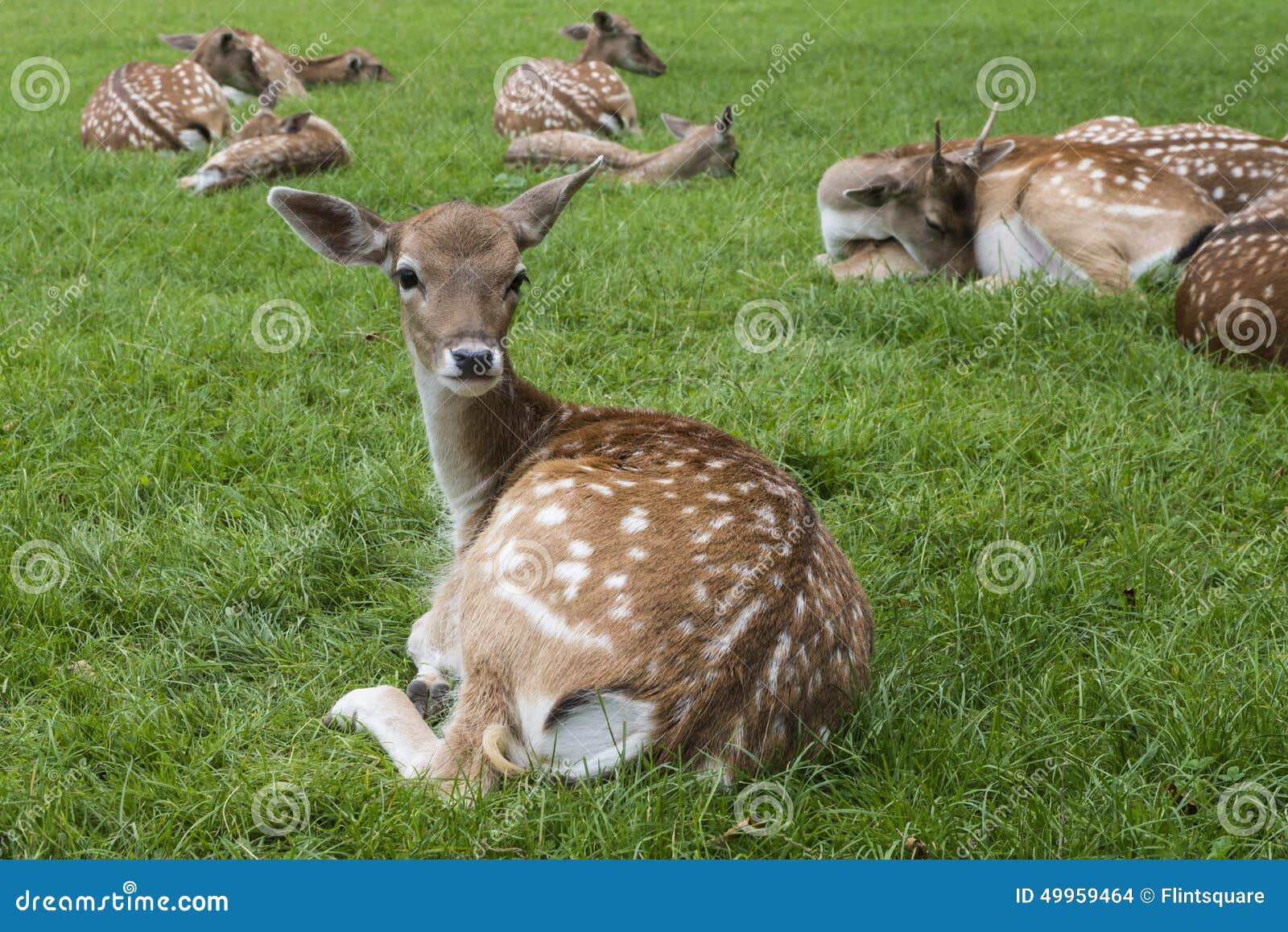 在草甸的Bambi