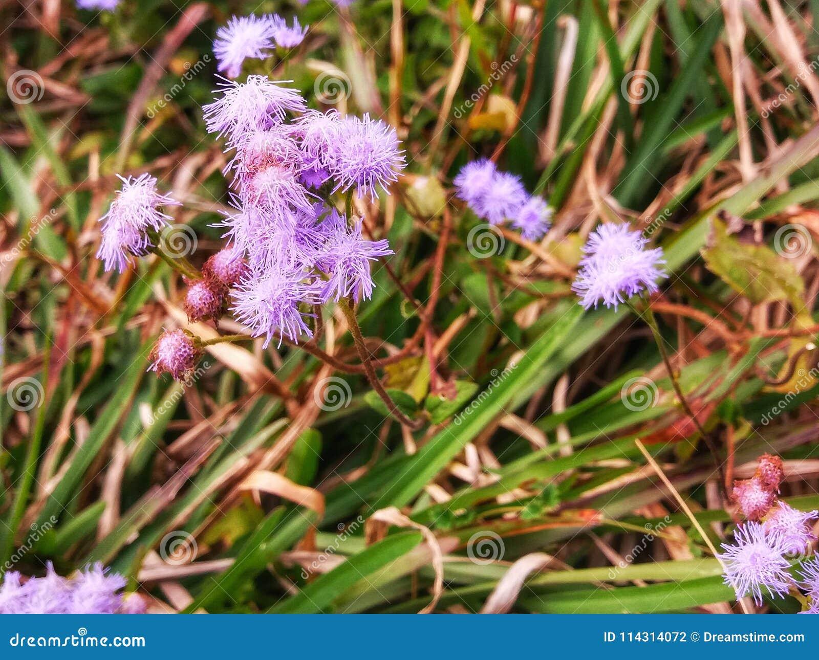 在草的一朵失去的花