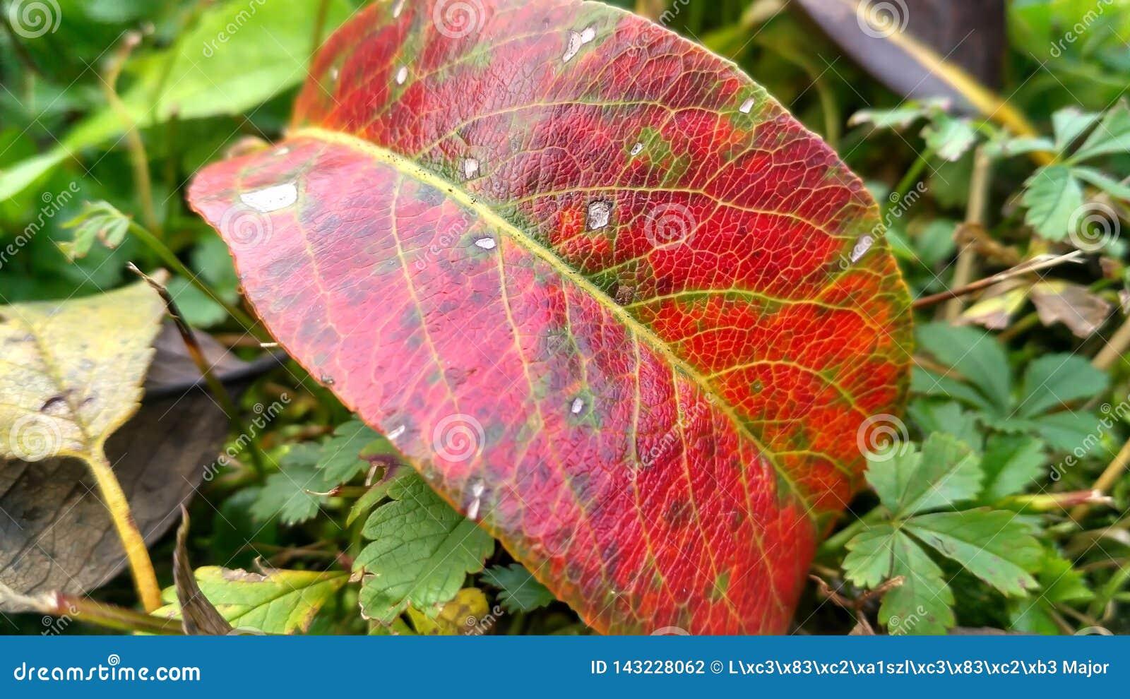 在草的一片叶子