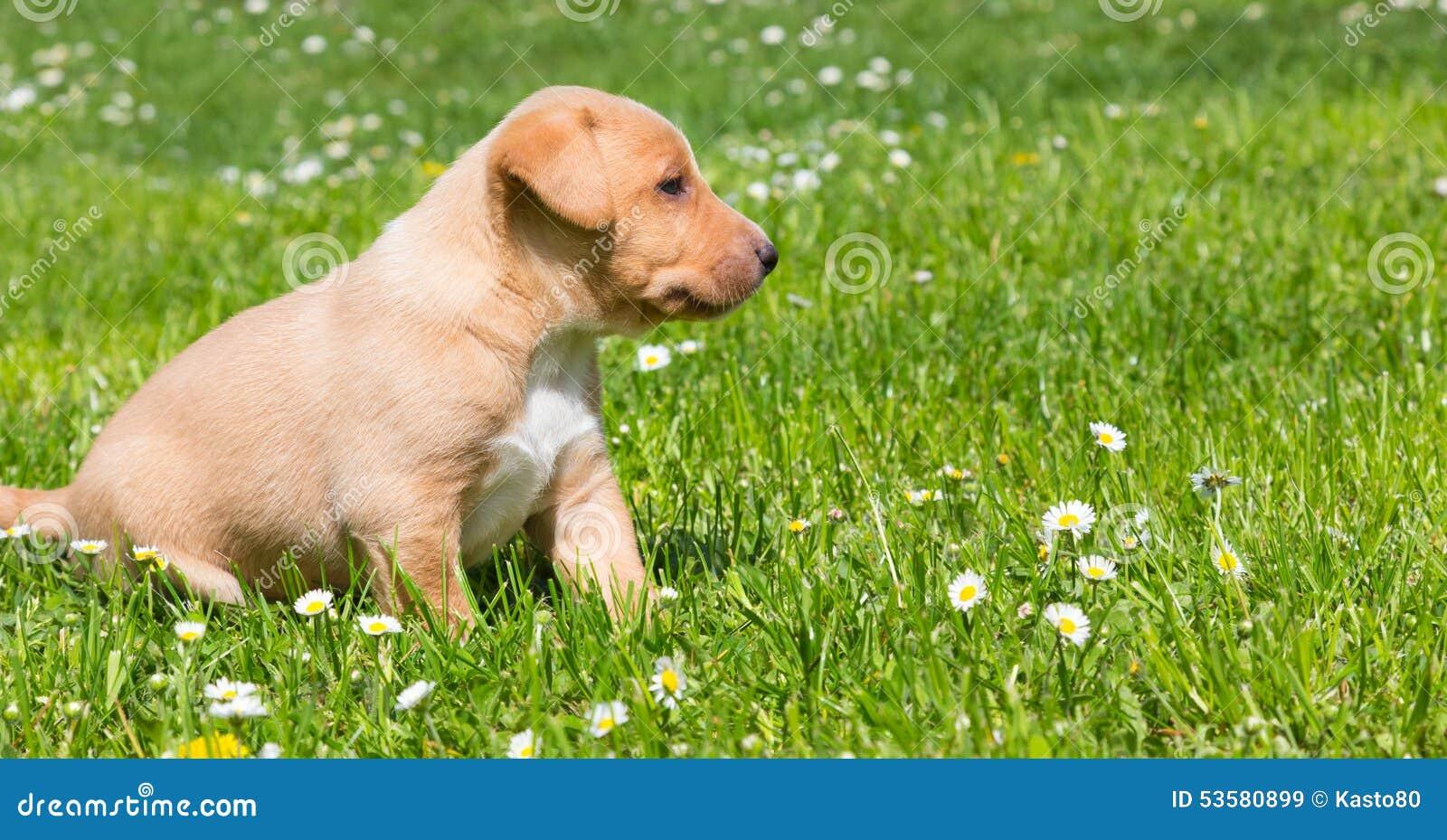 在草的混杂品种逗人喜爱的小的小狗