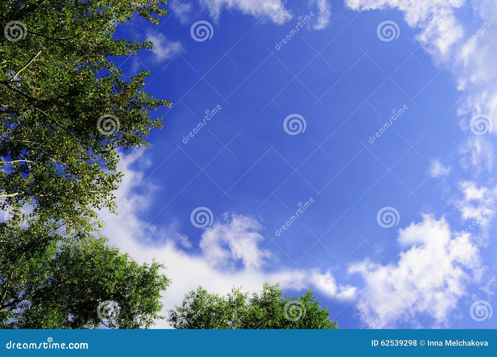 在蓝天的树上面
