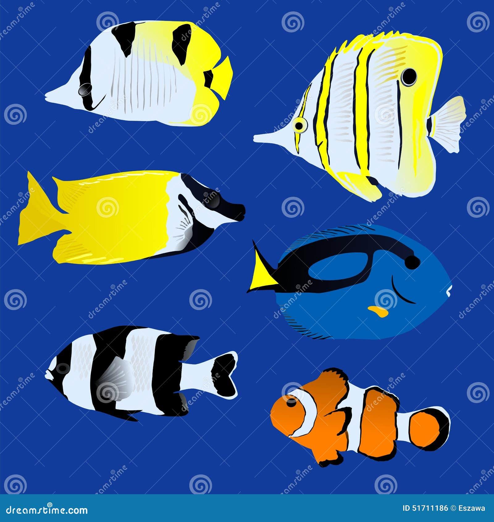 在蓝色背景的了不起的热带鱼收藏图片