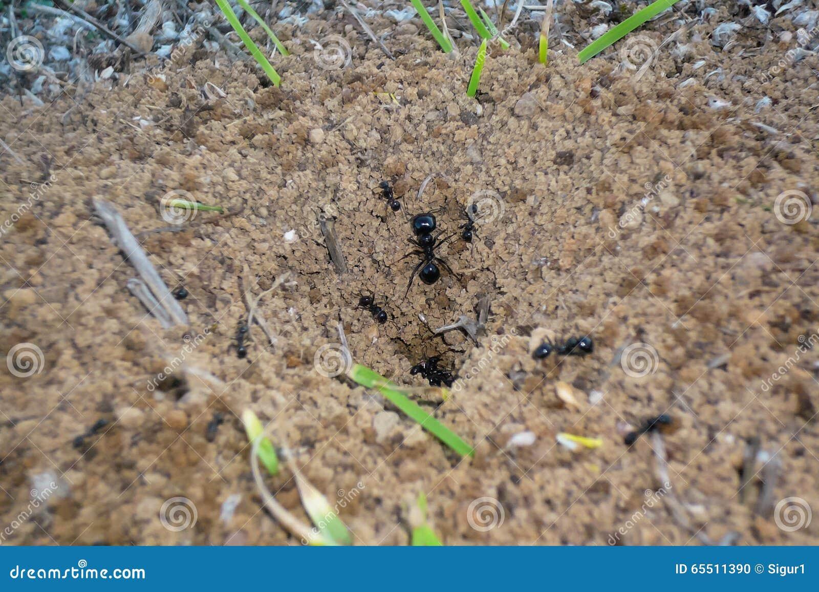 在蚁丘的蚂蚁