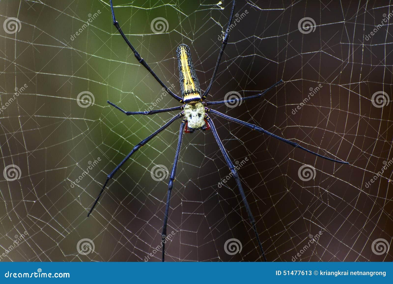 在蜘蛛网的蜘蛛