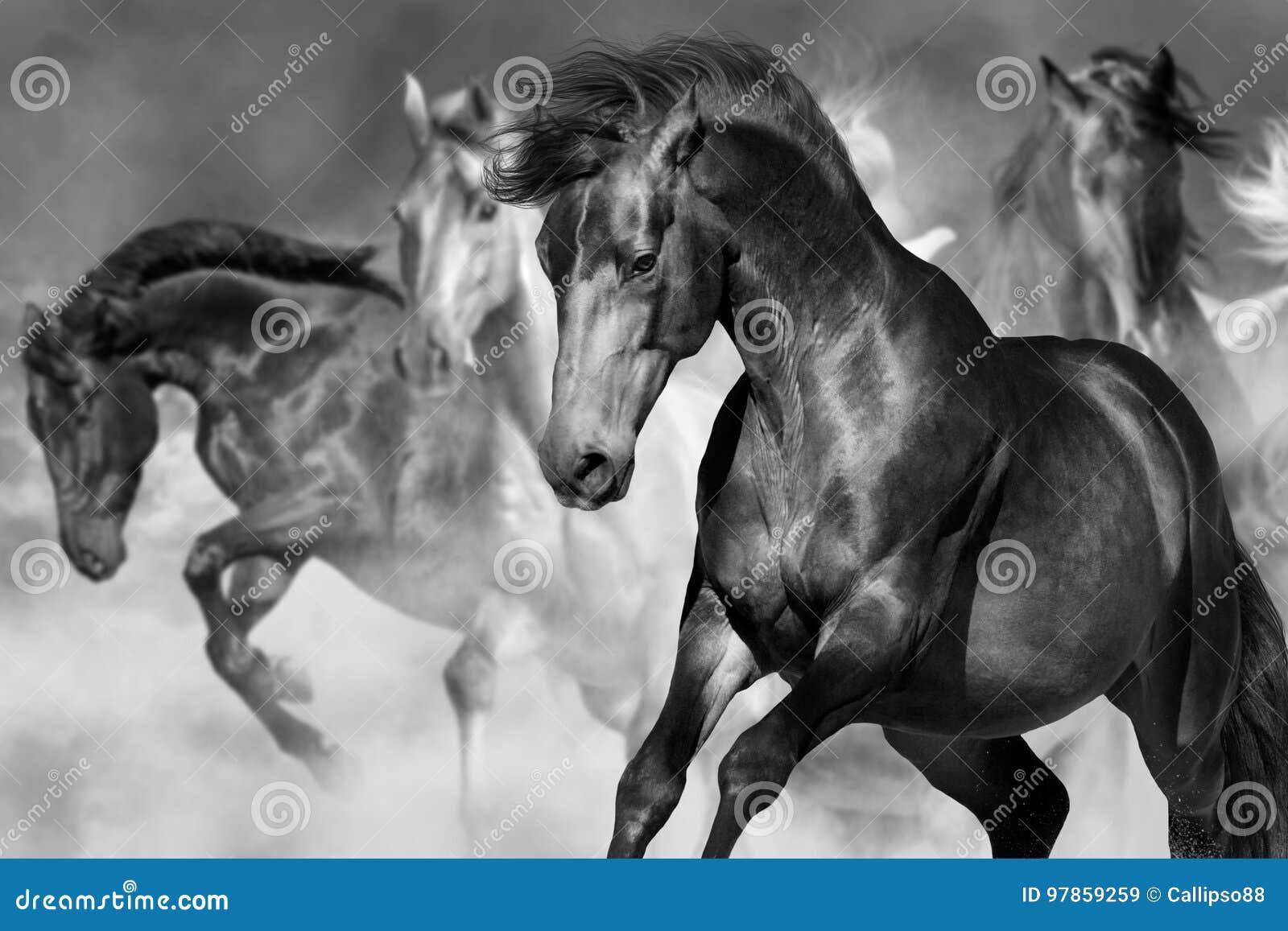 在行动的马画象