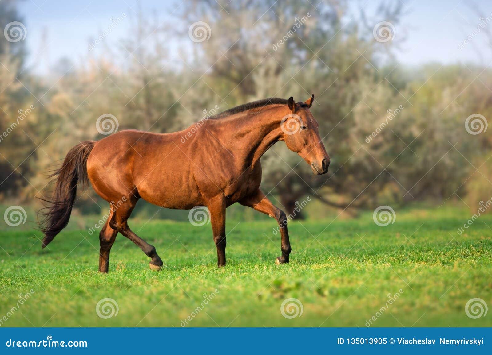 在行动的马