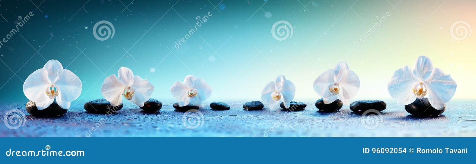 在行的兰花在温泉石头