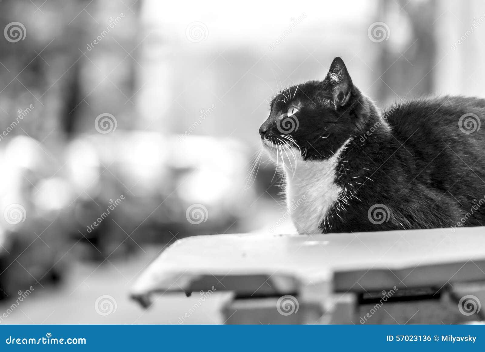 在街道上的猫,独立神色(BW)
