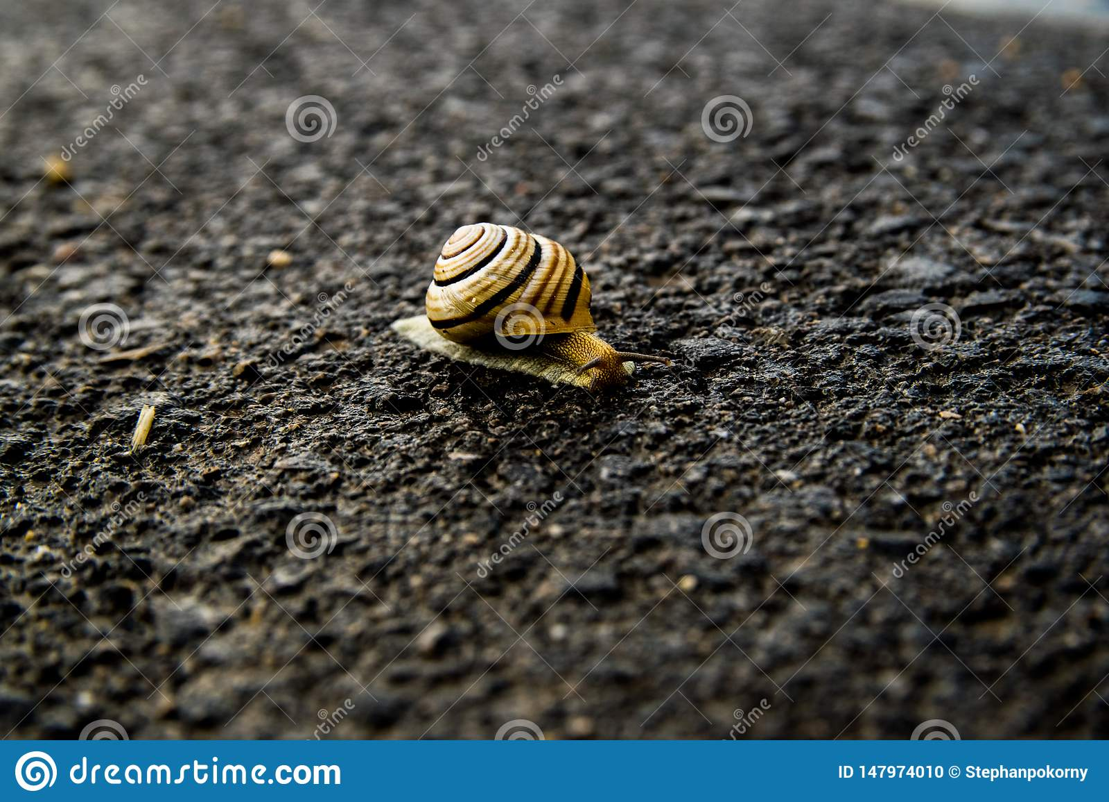 在街道上的蜗牛从点燃的黑暗