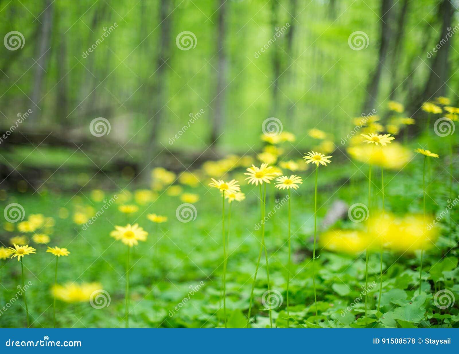 在被弄脏的背景的狂放的黄色花