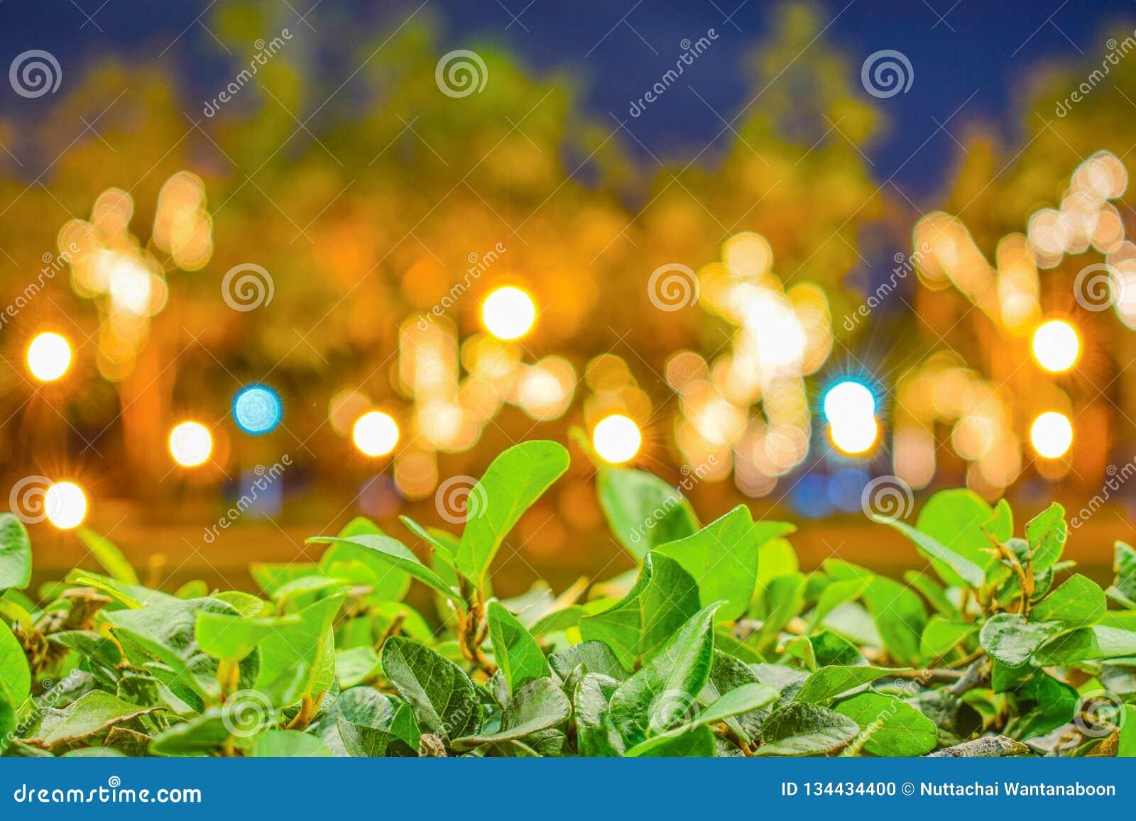 在被弄脏的Bokeh背景前面的绿色叶子