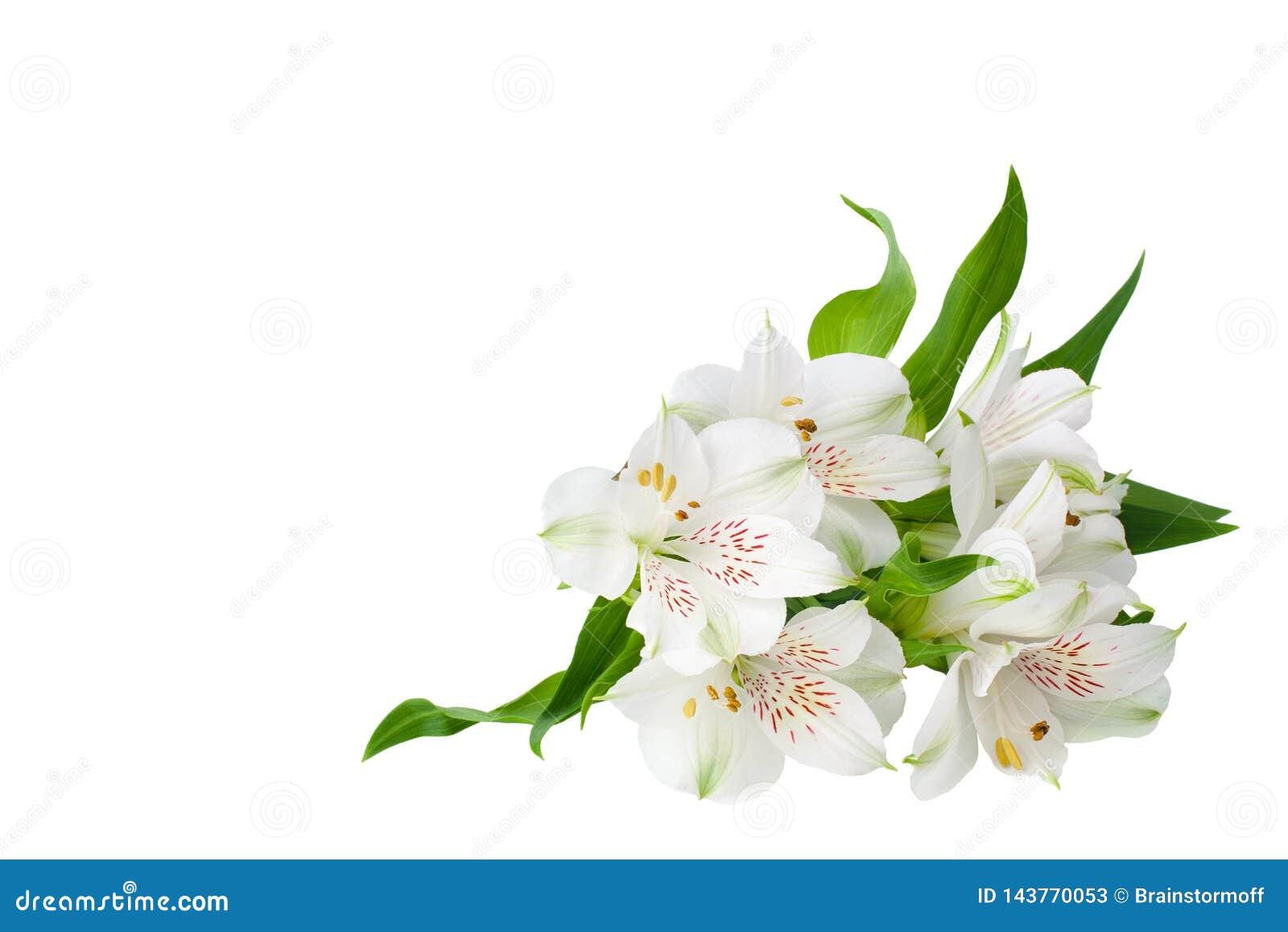 在被隔绝的白色背景的白色德国锥脚形酒杯花角落紧密,百合装饰边界的花束
