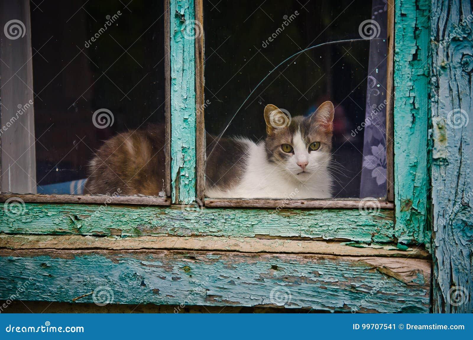 在视窗的猫