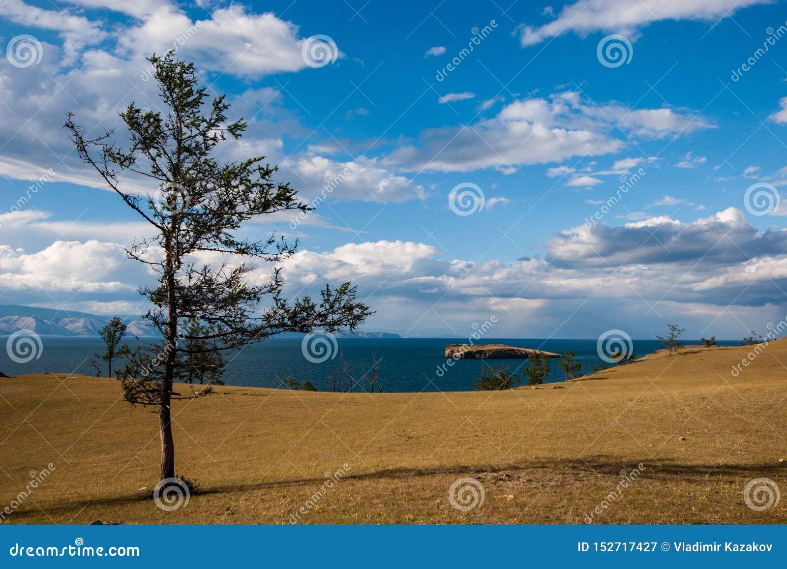 在贝加尔湖的一棵树干草原岸的 在湖是海岛 在天空的云彩