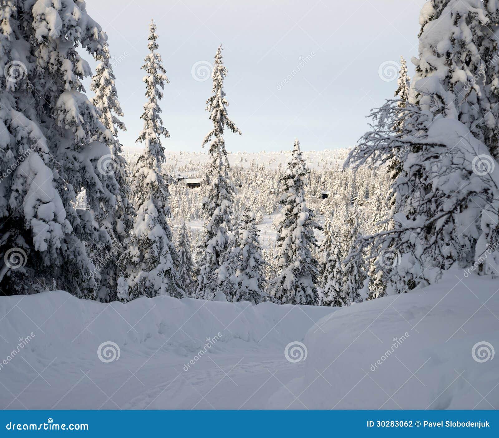 看法通过冬天森林