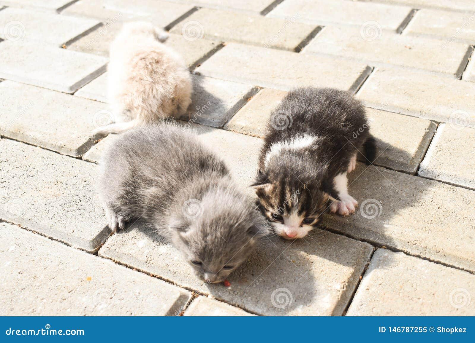 在路面的十只几天年纪小猫在后院