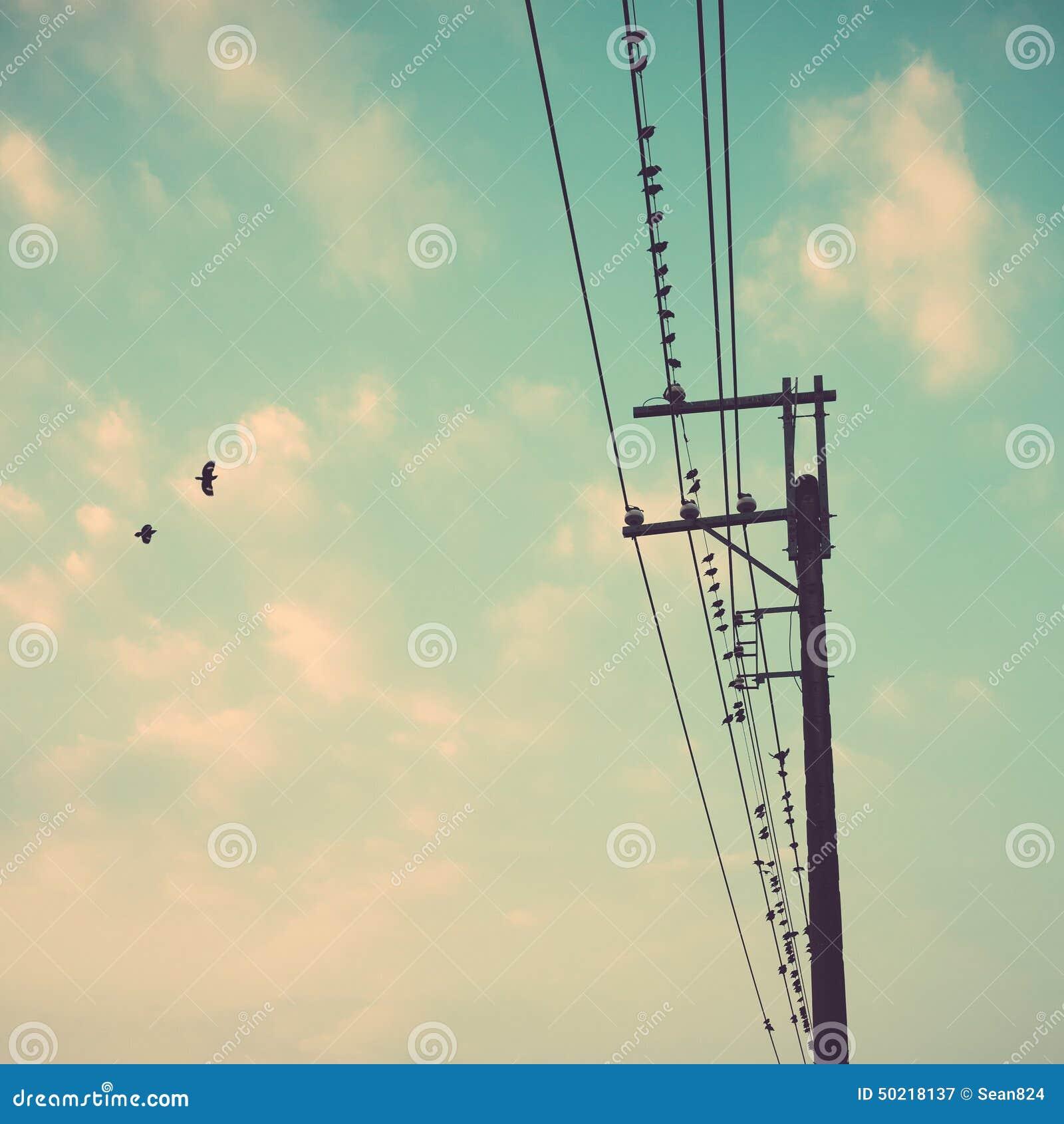 在输电线的鸟缚住反对与云彩backgroun的蓝天