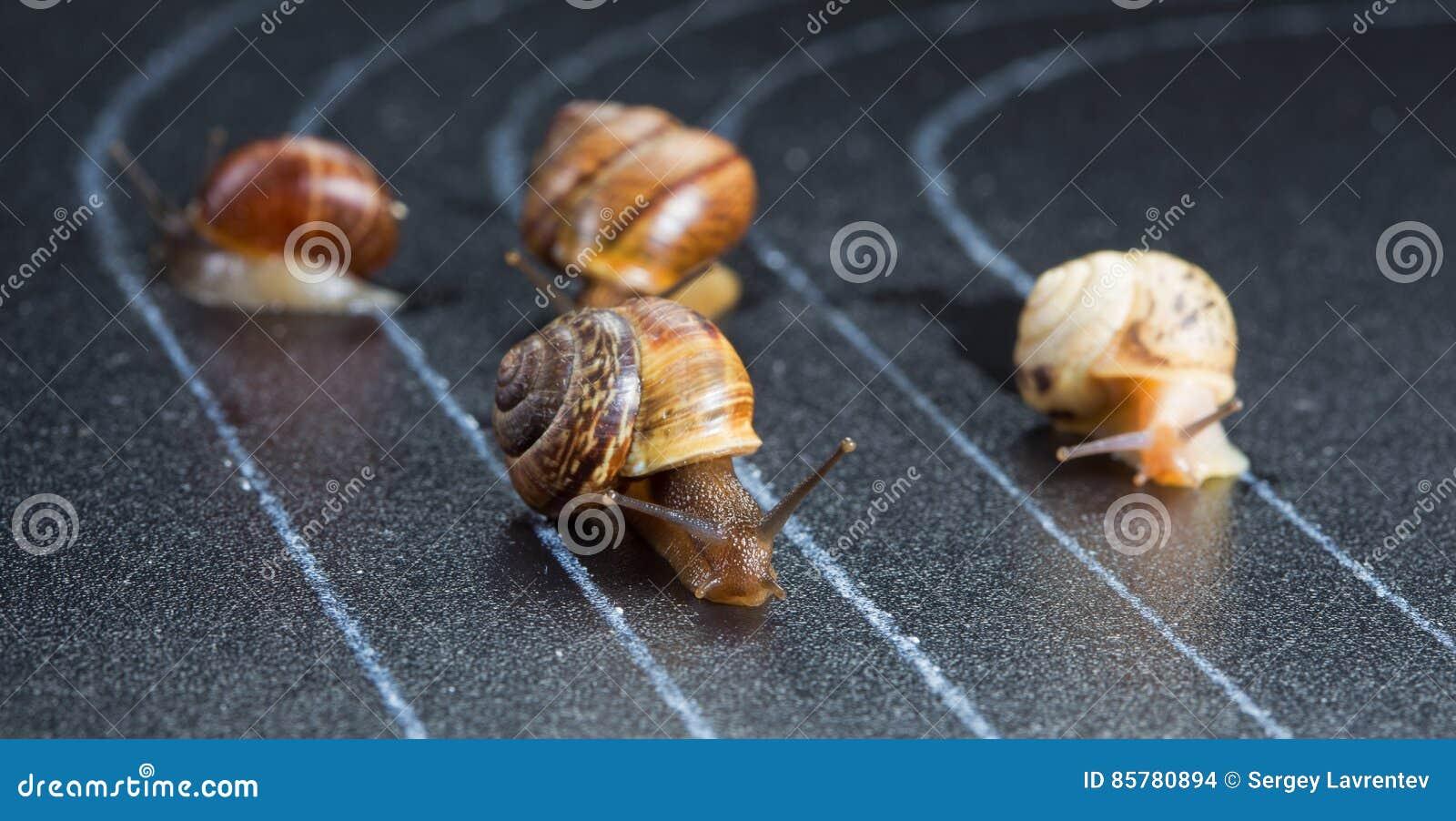 在运动轨道的蜗牛