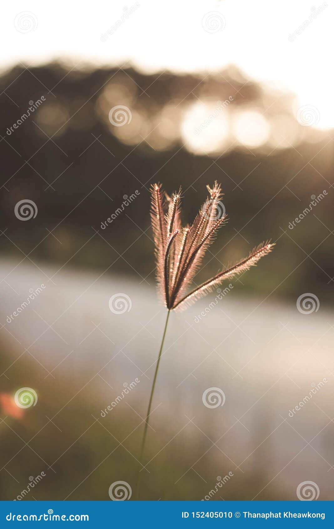 在途中的草