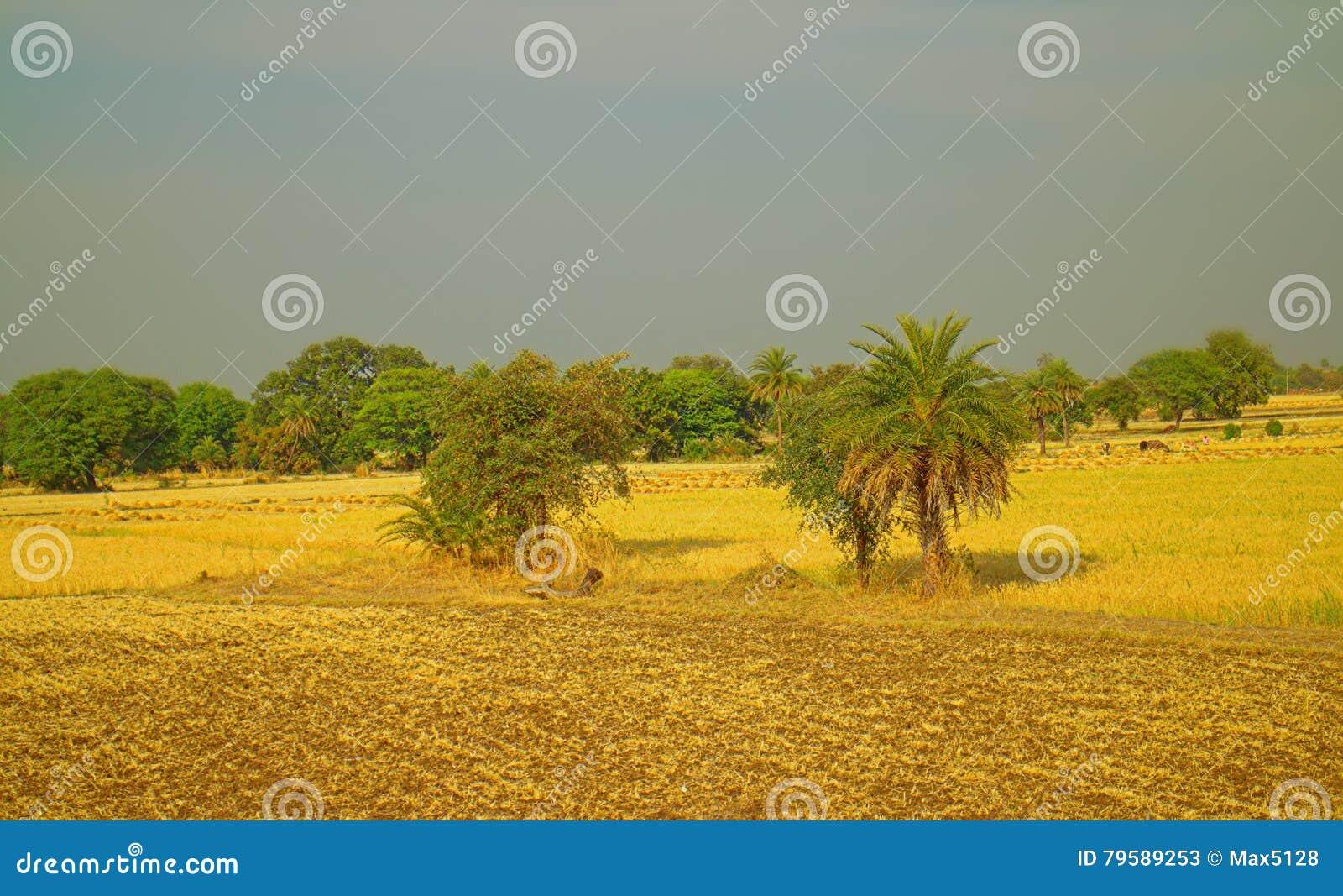 在那格普尔,印度附近的区域 与果树园农夫庭院的干燥山麓小丘