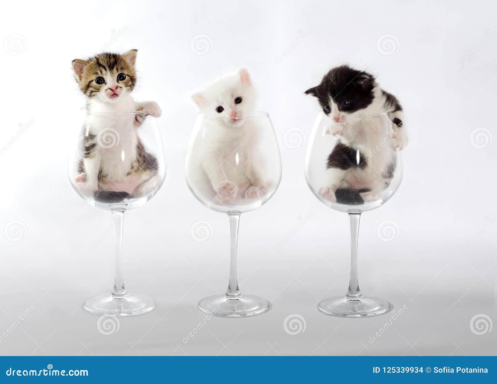 在酒杯的三只小猫在轻的背景