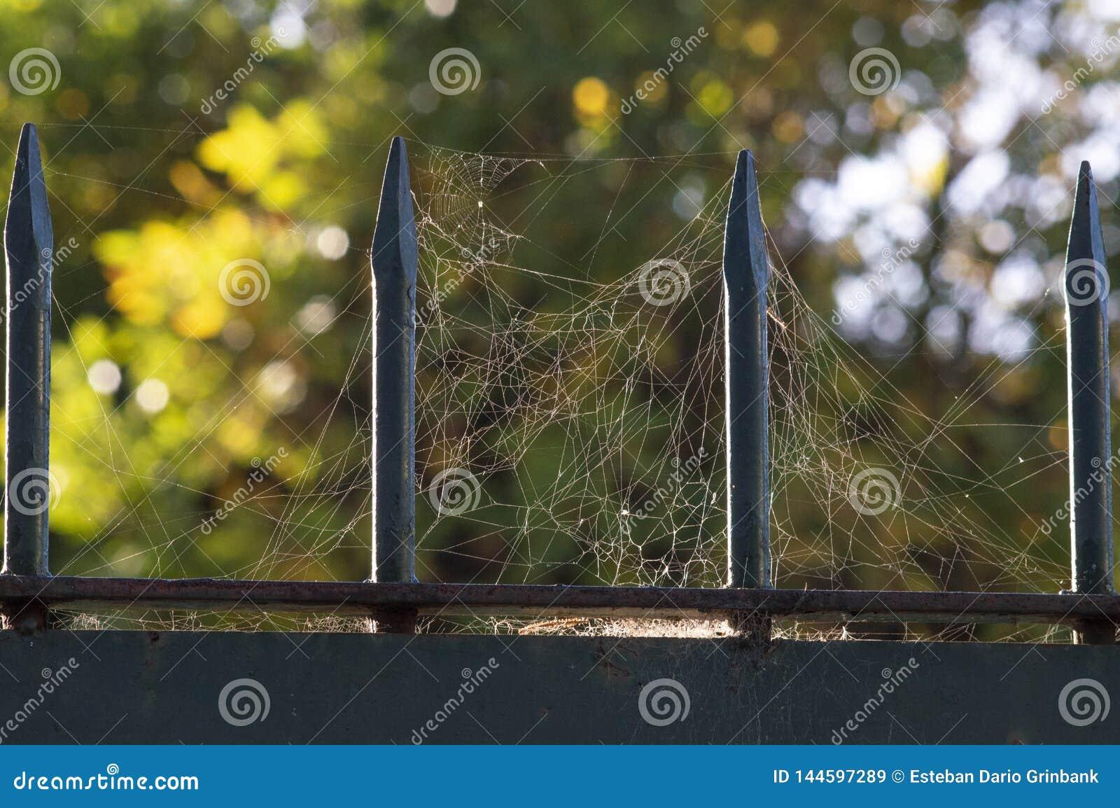 在金属花格的Spiderweb