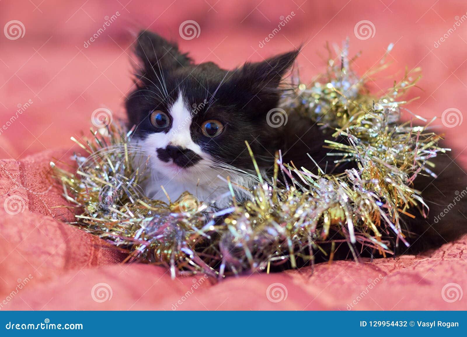 在银色闪亮金属片盖的英俊的黑白猫-圣诞节全部赌注 桃红色背景