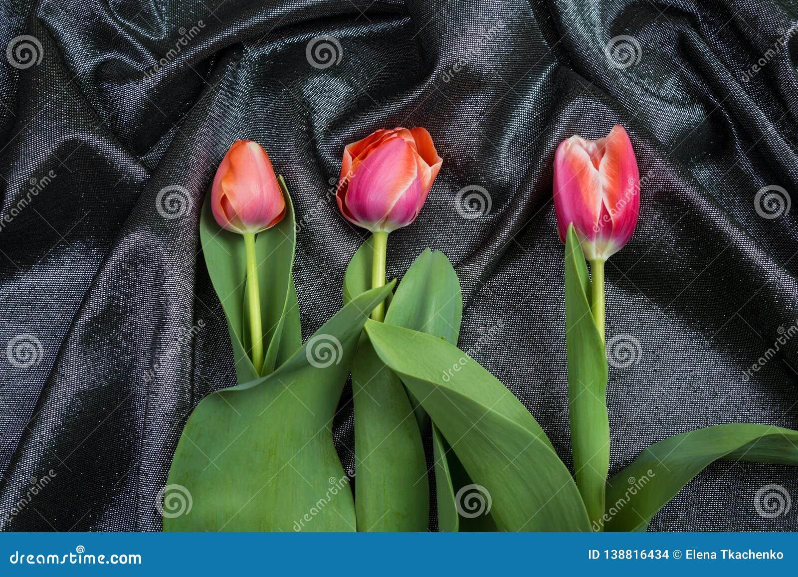 在锦织品的春天嫩桃红色郁金香