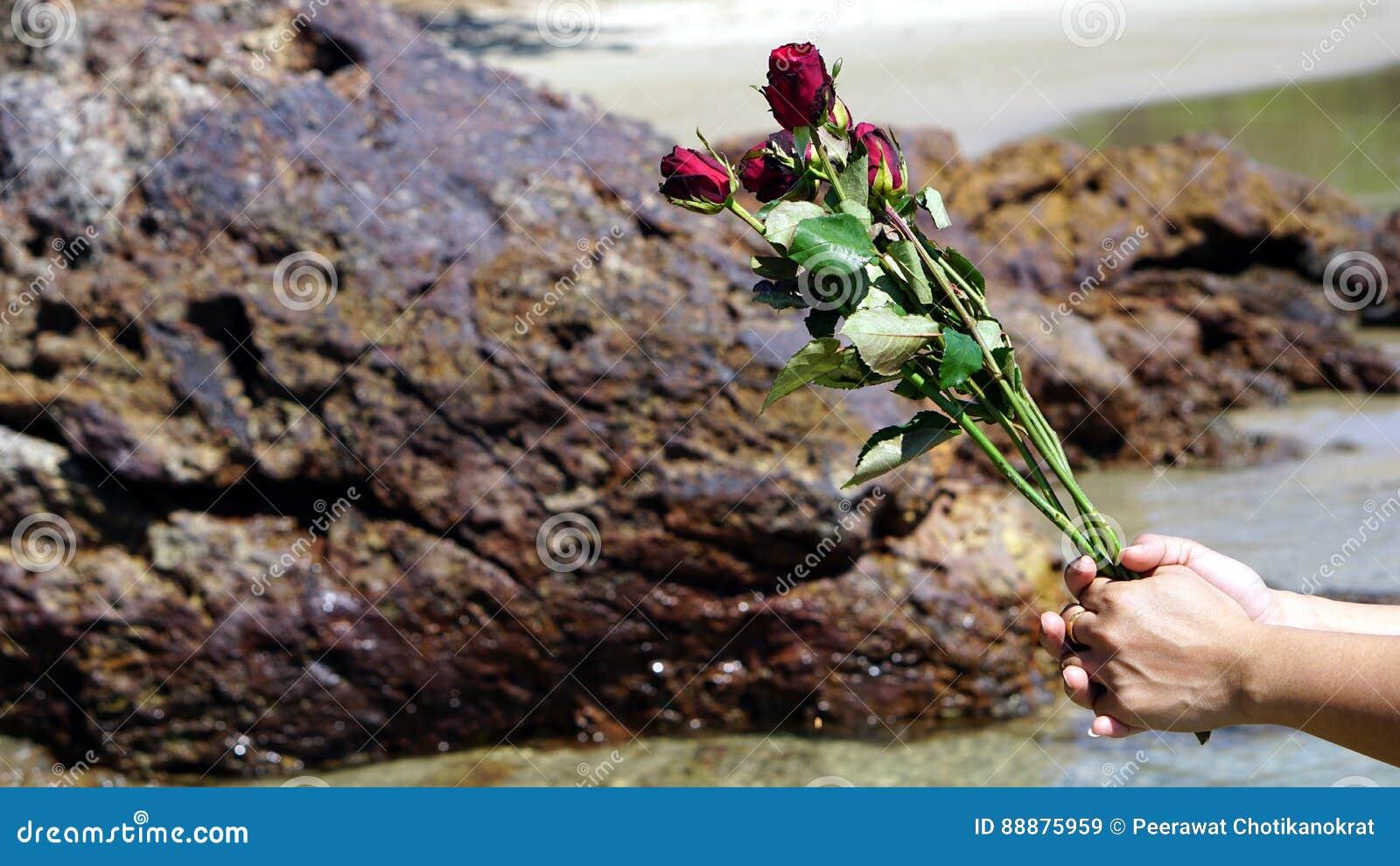 在镇静热带海滩的玫瑰