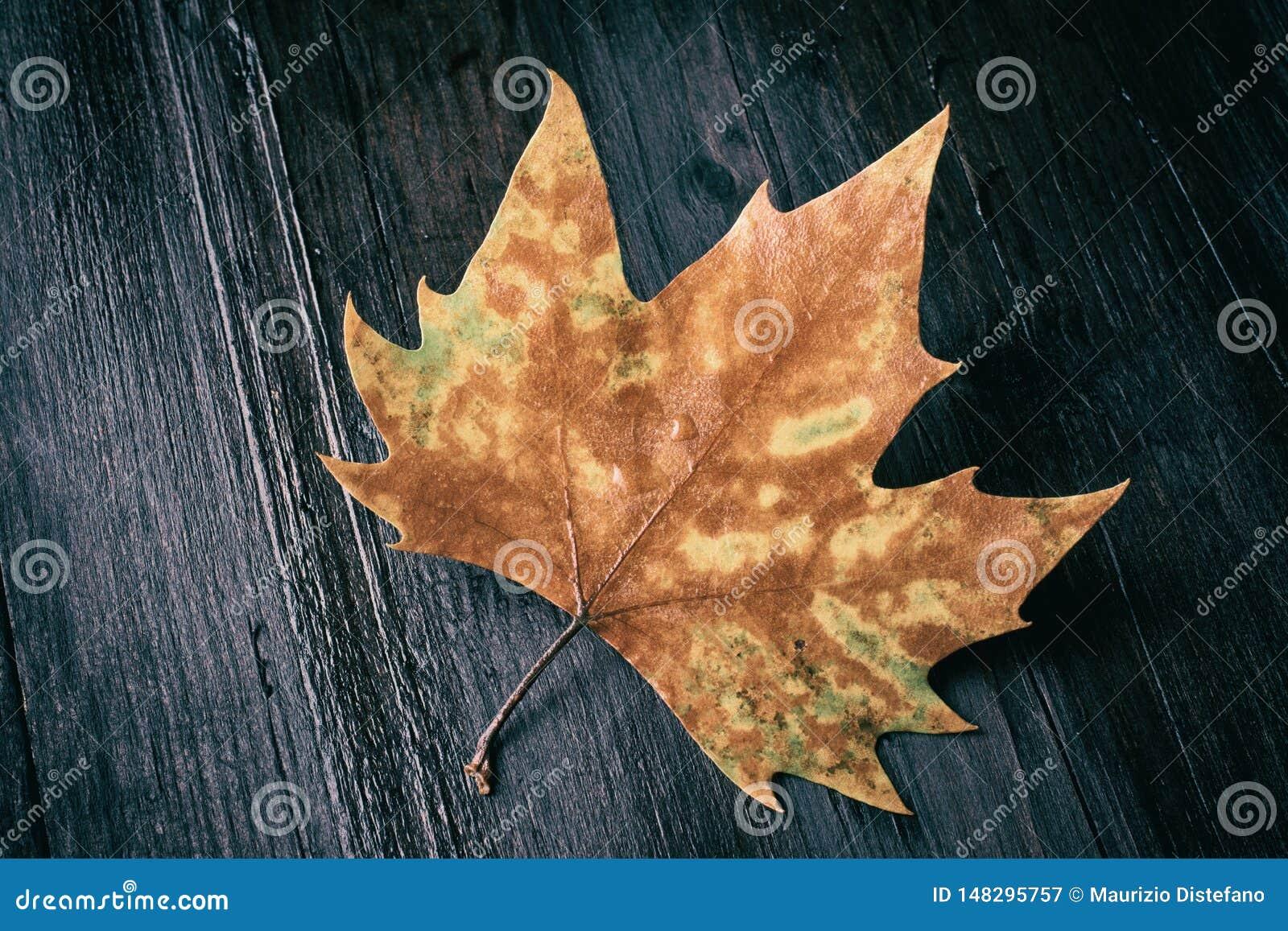 在长木凳的死的叶子在黑暗的背景