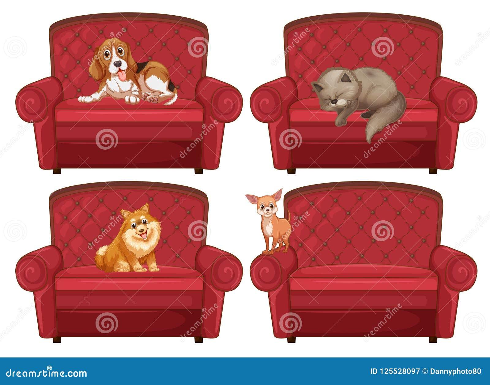 在长沙发的宠物