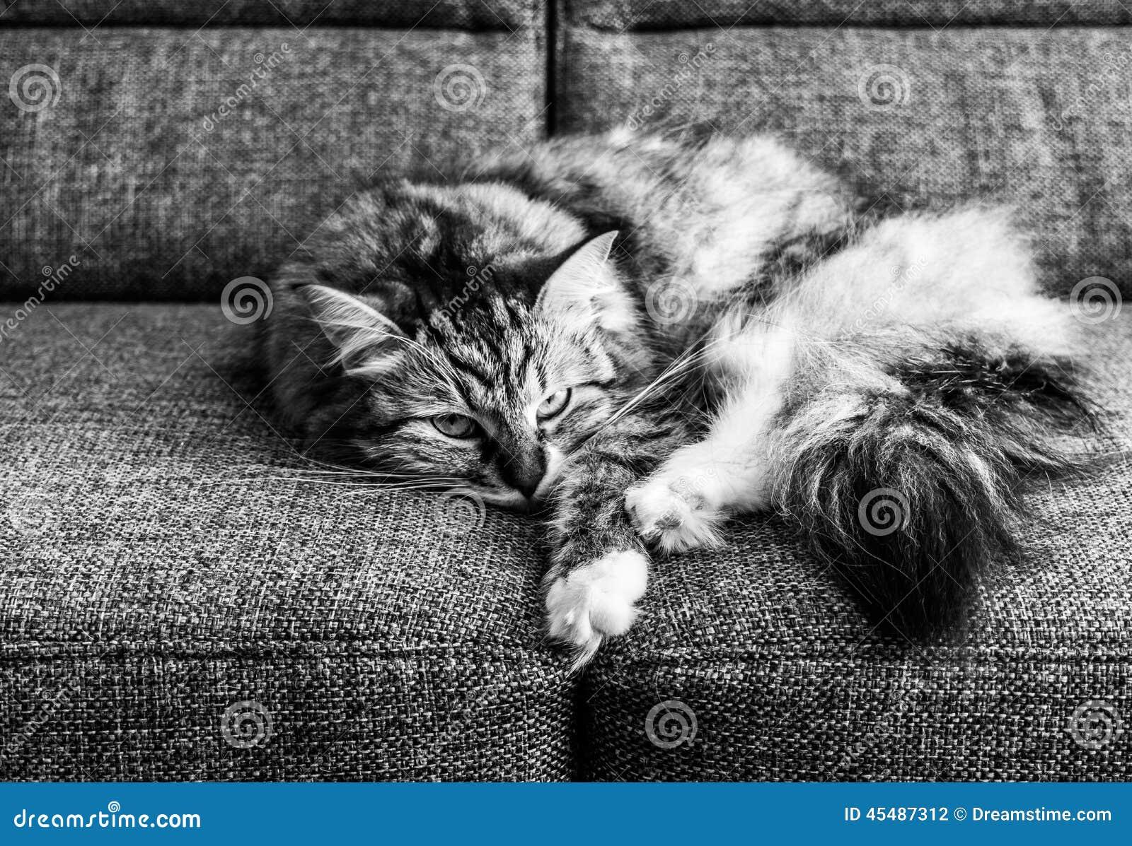 在长沙发(B&W)的猫