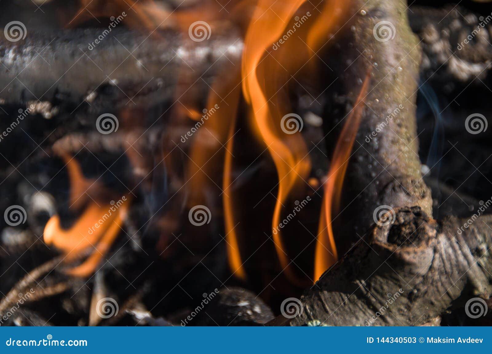 在阵营的火 篝火
